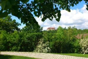 Bewirtung in den Weinbergen am Fusse der Burg Hoheneck